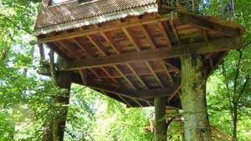 Soutenez le projet de l'éco-source arboricole